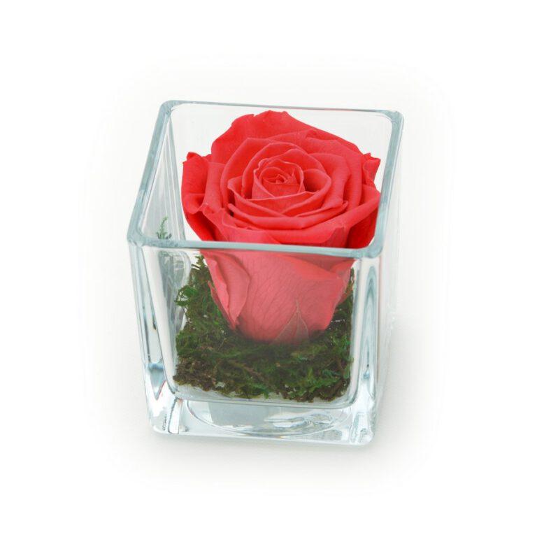 Roos in glas S vierkant