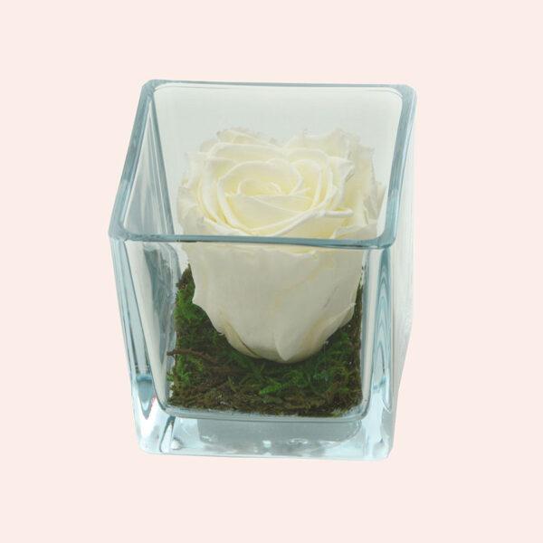 Roos in glas S vierkant-ivoor-rose