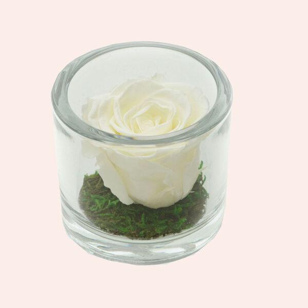 Roos in glas S rond-ivoor-rose