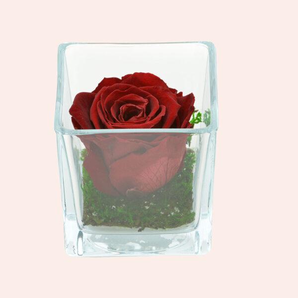Roos in glas S vierkant-bordeaux-rose