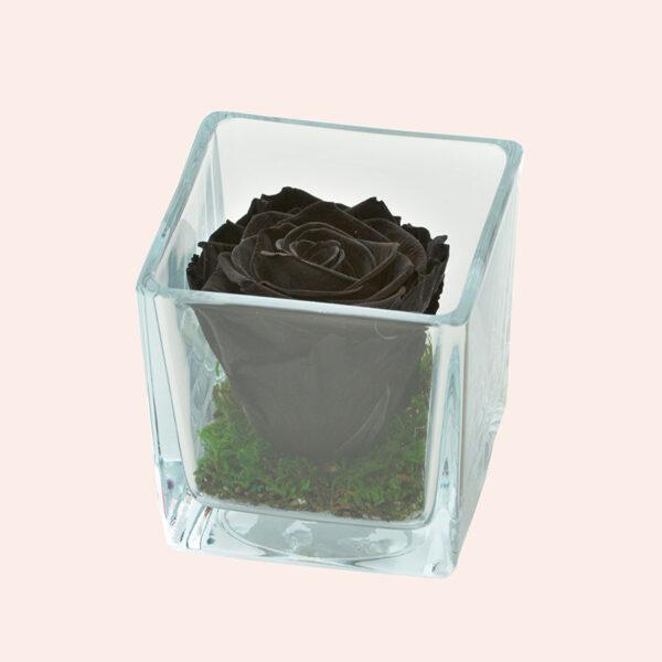 Roos in glas S vierkant-zwart-rose