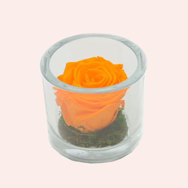 Roos in glas S rond-oranje-rose