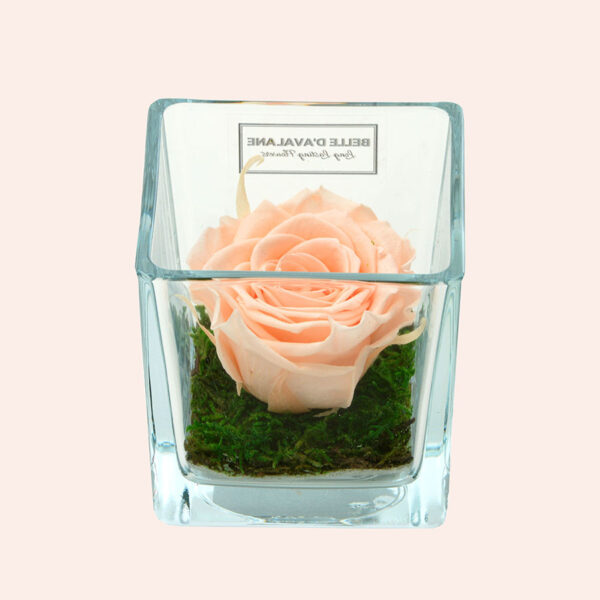 Roos in glas S vierkant-lichtroze-rose