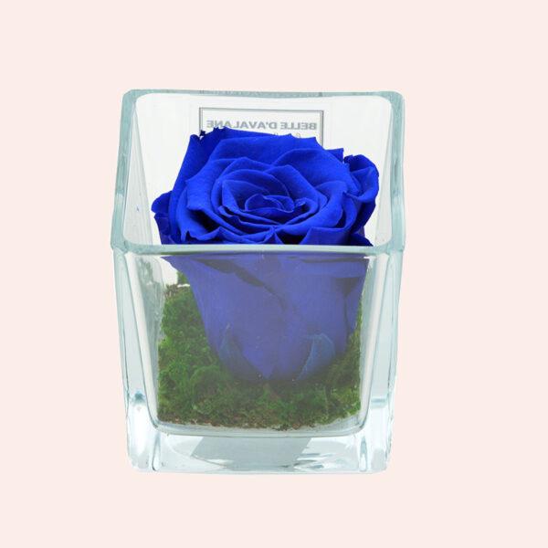 Roos in glas S vierkant-donkerblauw-rose