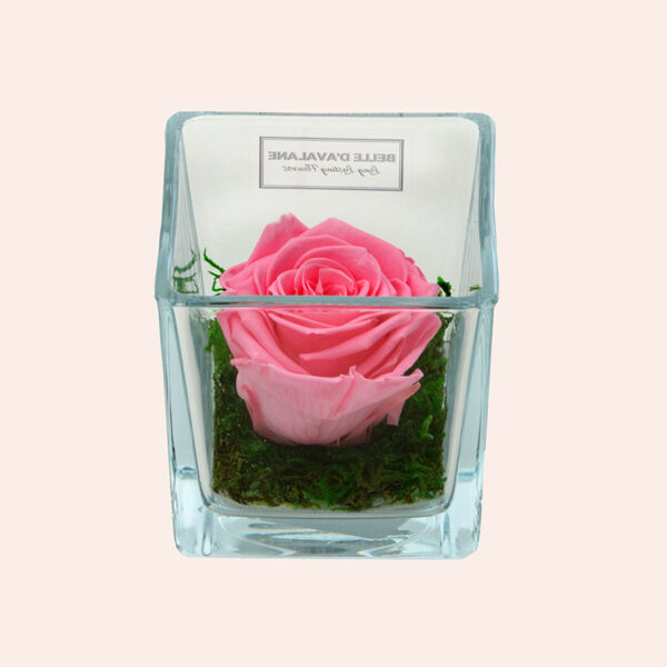 Roos in glas S vierkant-roze-rose