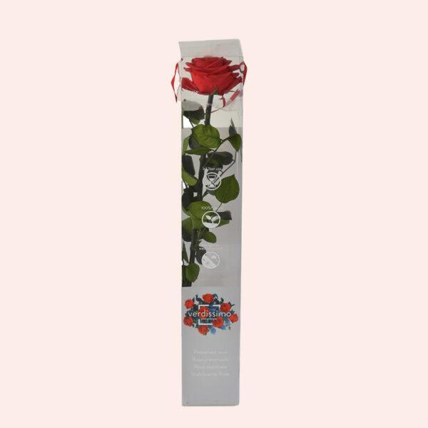 Roos op steel Verdissimo XXL 55 cm