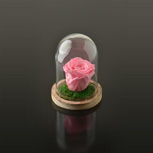 Rose in een stolp S-bruine-voet-roze-rose