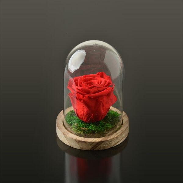 Rose in een stolp S-bruine-voet-rood-rose