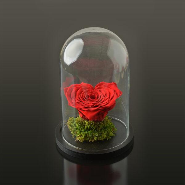 Hartvormige roos 'LOVE' XXL-zwarte-voet-rood-rose