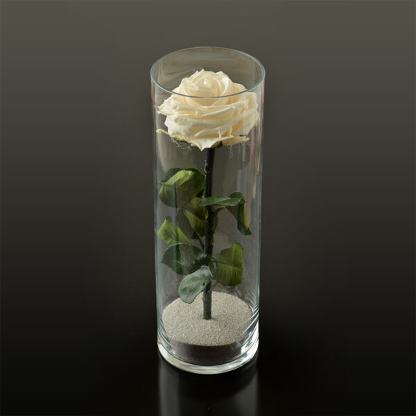 Rose in een cilinder vaas M Ø10x30 cm
