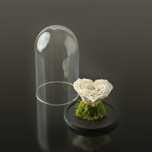Hartvormige roos 'LOVE' XXL-zwarte-voet-wit-rose