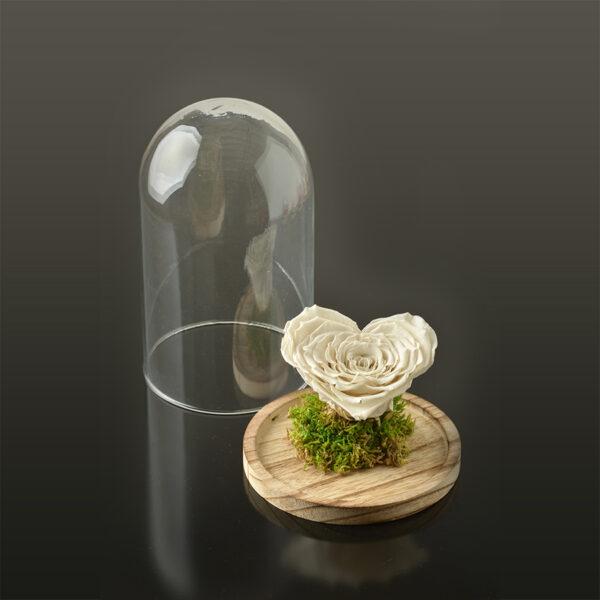 Hartvormige roos 'LOVE' XXL-bruine-voet-wit-rose