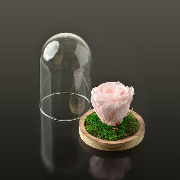 Rose in een stolp S-bruine-voet-lichtroze-rose