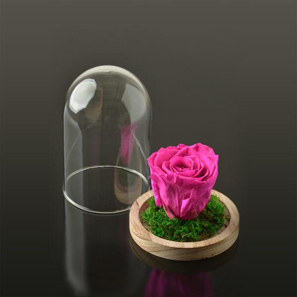 Rose in een stolp S-bruine-voet-fuchsia-rose
